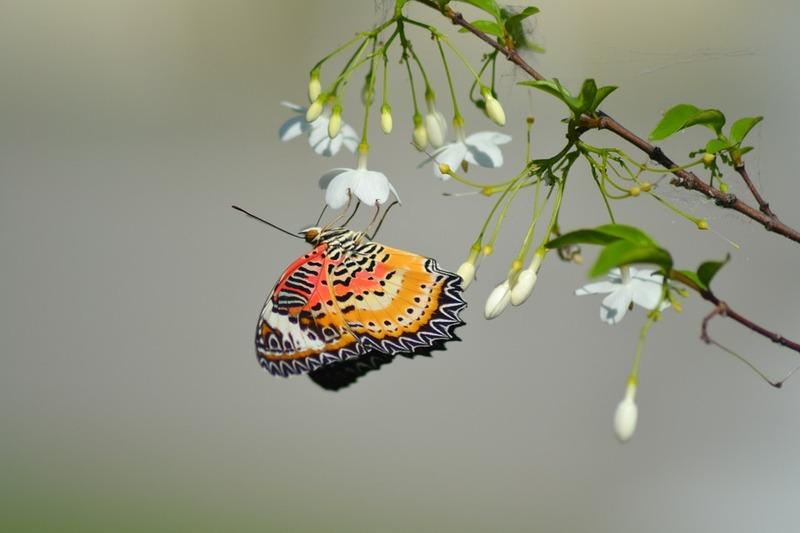 butterfly-789522_960_720