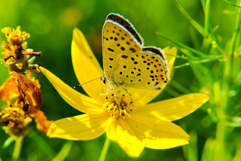 flower-189198_960_720_2