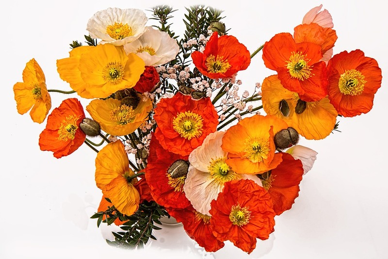 poppies-1631682_960_720.jpg