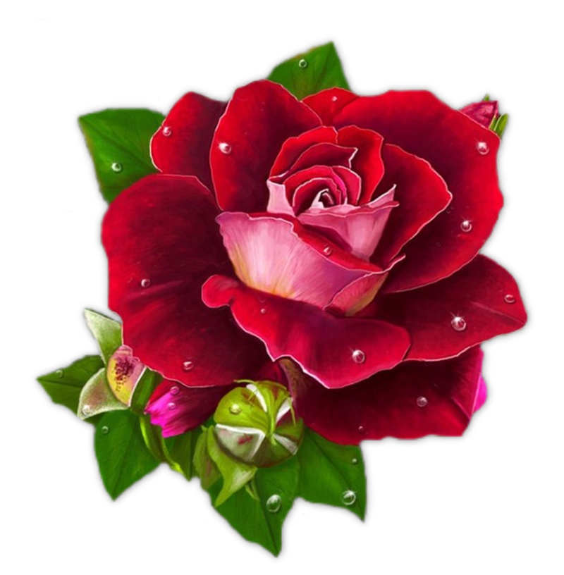 Картинки бордовые цветы