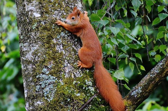 squirrel-803619_640