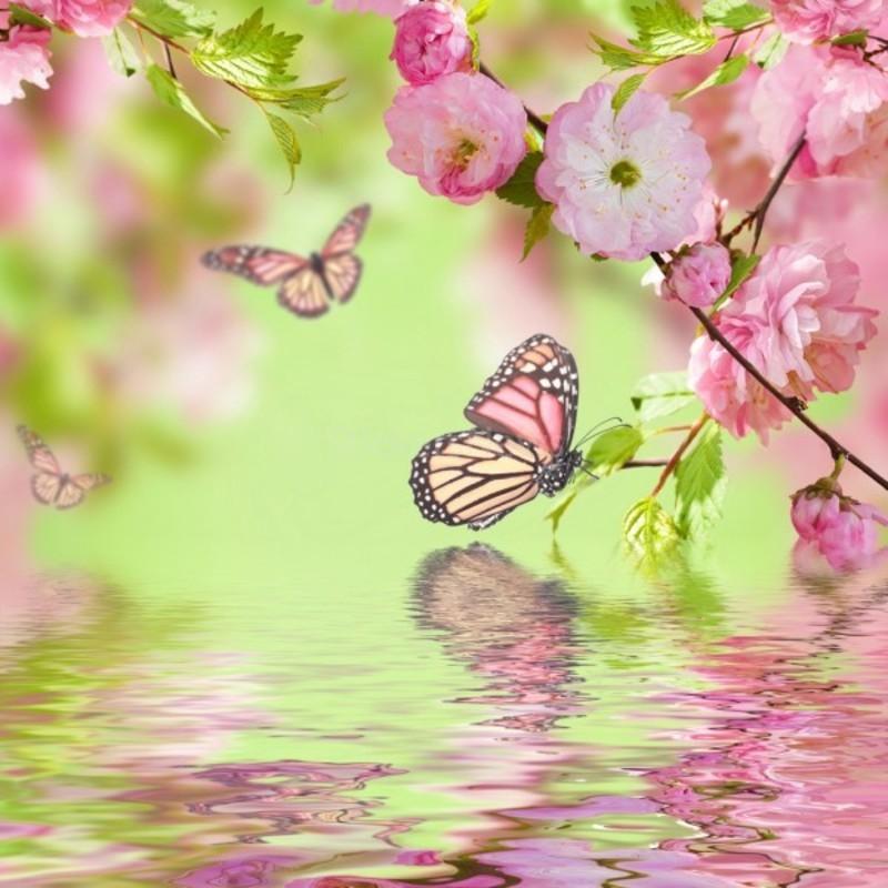 papillons tube gif belle image. Black Bedroom Furniture Sets. Home Design Ideas