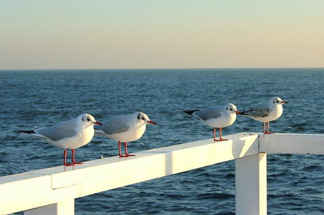 the-seagulls-630915_640